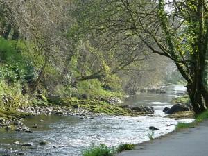 00623-river-tavy-tavistock